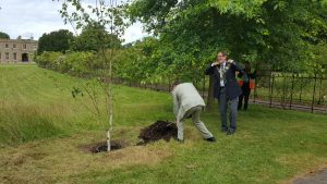 Planting the tree, watched by the Mayor of Epsom and Ewell